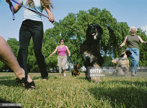 owners walking with their dogs at dog show, low angle view - dog show stock pictures, royalty-free photos & images