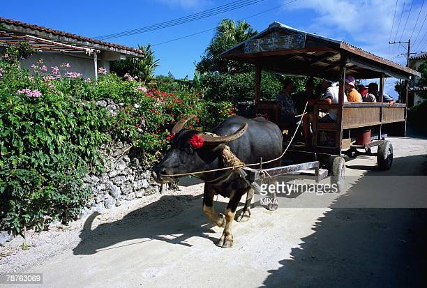 Ox wagon in Taketomi Island, Okinawa Prefecture, Japan