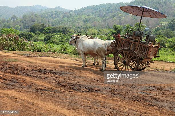 oxcart in thailand - ox cart stock-fotos und bilder