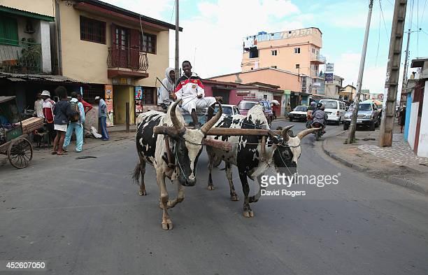 Oxen pull a wagon in Antananarivo on July 21 2014 in Antananarivo Madagascar