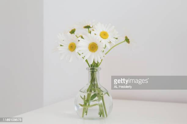 oxeye daisies in a glass vase - デイジー ストックフォトと画像