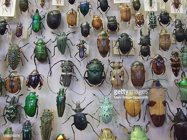 Oxford beetle drive