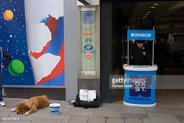 Oxford Street information point and resting RSPCA dog The animal is spread across the pavement while its charity minder hopes for donations in the...