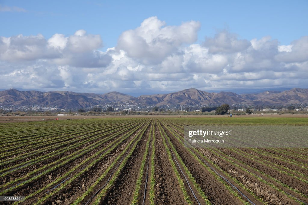 Oxnard agriculture and Ventura Foothills : Stock Photo