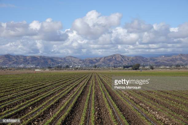 Oxnard agriculture and Ventura Foothills