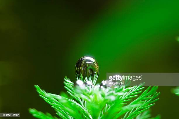 ossigeno di pensiero da pianta acquatica - pianta acquatica foto e immagini stock