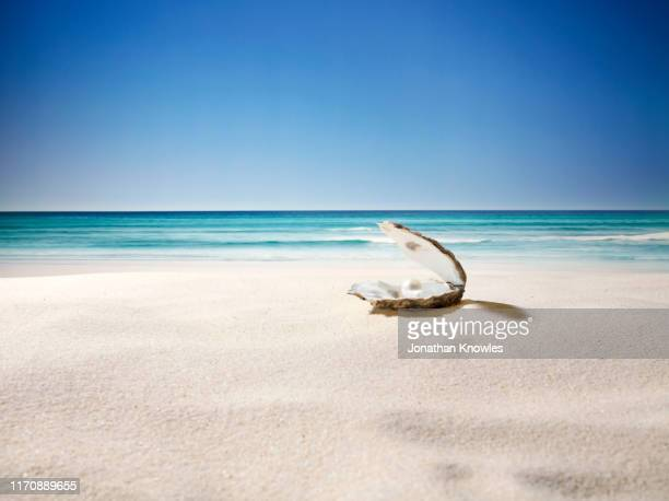 oyster and pearl - seascape stock pictures, royalty-free photos & images