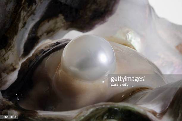 oyster and pearl - pearl jewelry stock pictures, royalty-free photos & images