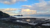 oyster bed cancale brittany france