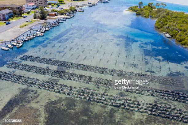oyster beds at the mouth of the coolongolook river, tuncurry, nsw, australia. - eroded stock pictures, royalty-free photos & images