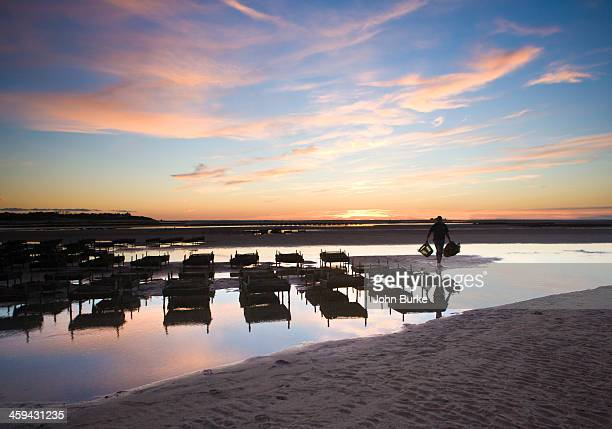 oyster beds,low tide