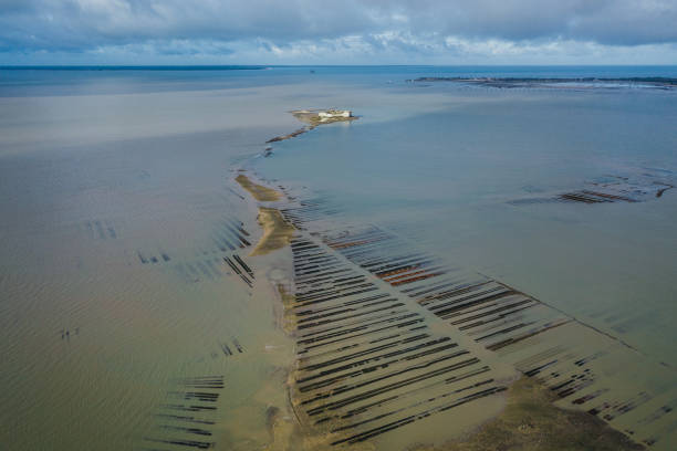 Oyster farm as seen from an aerial point of view, France