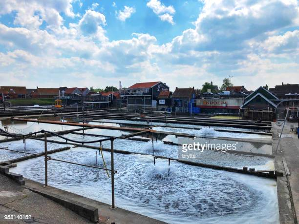 oyster farm in yerseke,zeeland,netherlands - mollusca stock photos and pictures