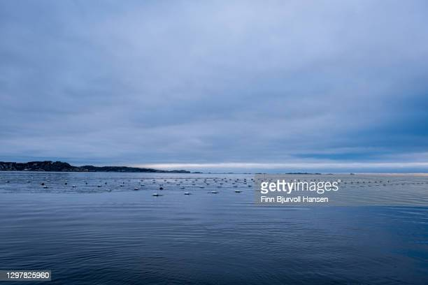 oyster farm outside stavern in norway - finn bjurvoll stock pictures, royalty-free photos & images