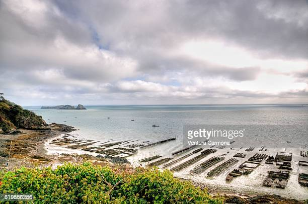 oyster farms in cancale (brittany, france) - cancale photos et images de collection