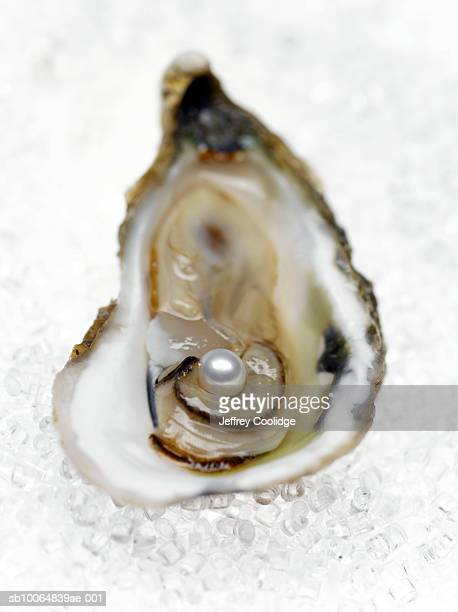 oyster half shell with pearl inside, close-up (differential focus) - oyster pearl stock photos and pictures