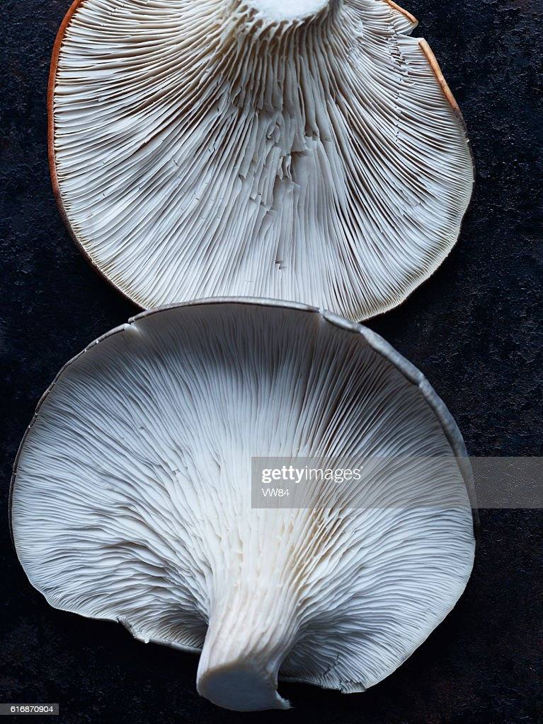 Oyster Mushrooms : Stock Photo