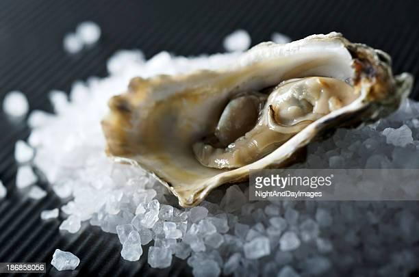 Oyster on Rock Salt