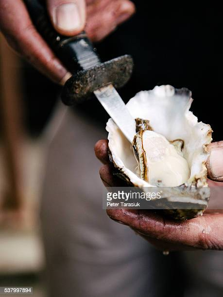 oyster - tasmania stock pictures, royalty-free photos & images
