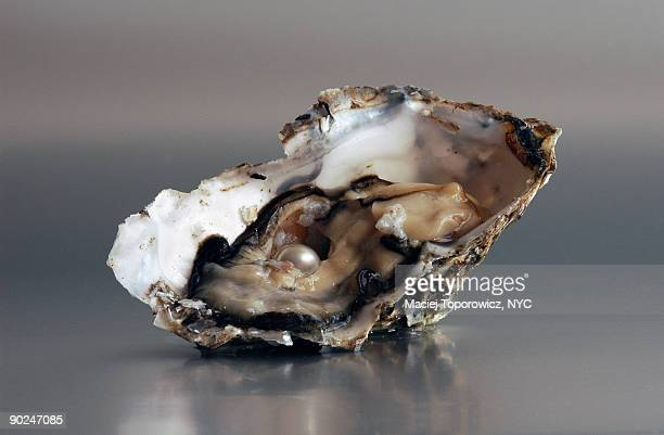 oyster - oyster pearl stock photos and pictures