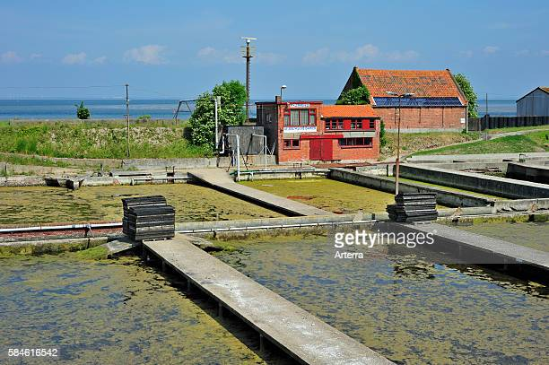 Oyster pits at Yerseke along the Oosterschelde / Eastern Scheldt known for its aquaculture in Zealand the Netherlands