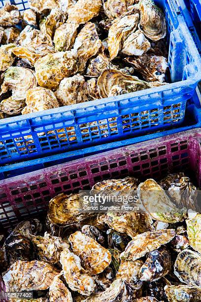 Oyster production