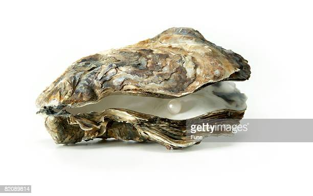 oyster shell with pearl - oyster pearl - fotografias e filmes do acervo