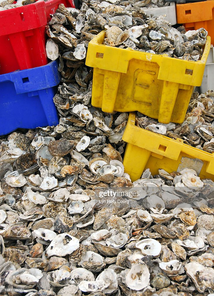 Oyster shells and coloured plastic boxeson a beach : Stock Photo