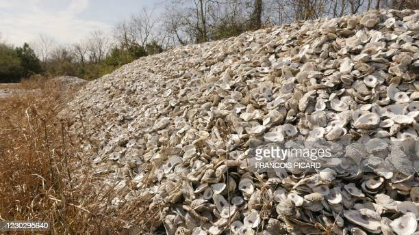Oyster shells are seen at Red Bluff Road, a wasteland rented from the Port of Houston used as a curing site on December 21, 2020 in Pasadena, Texas....
