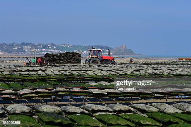 oysterbeds, jersey, u.k. - jersey england stock photos and pictures