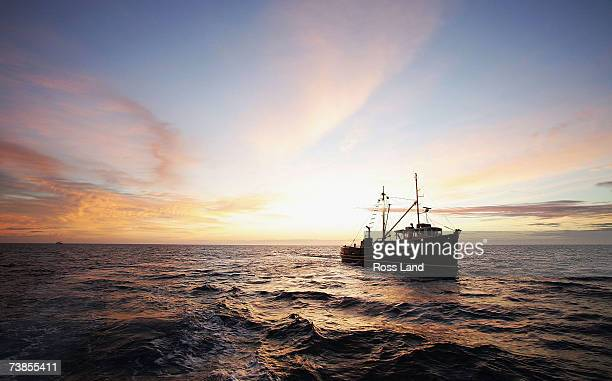 Oysters are hauled aboard the Golden Lea as she sails off Stewart Island approximately 20 miles from her home port on March 28 2007 in Bluff New...