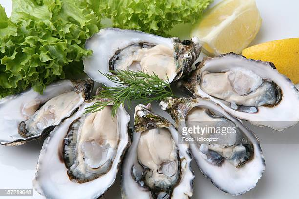 oysters on white plate - fresh seafood stock photos and pictures