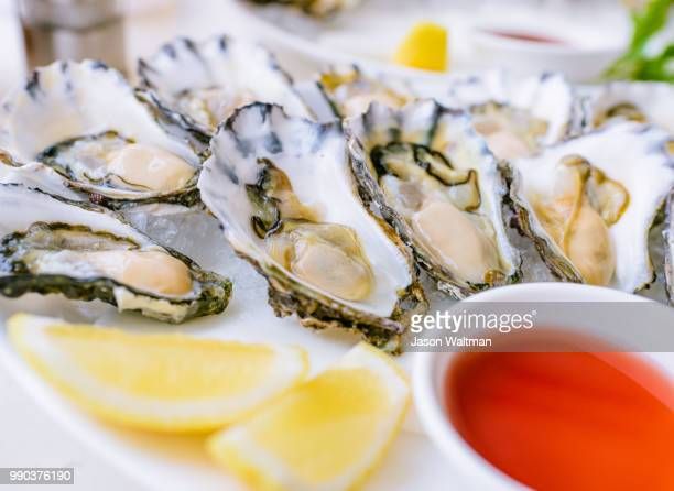 oysters - oyster shell stock photos and pictures