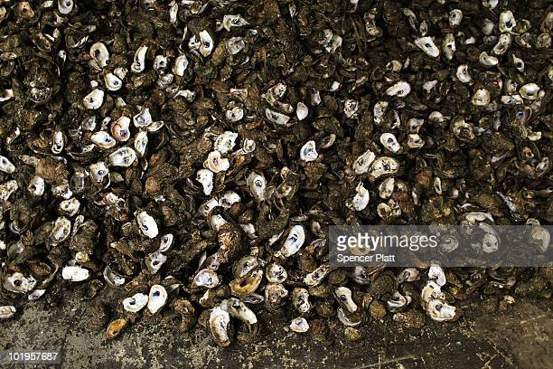 Oysters shells are viewed at the PJ Oyster Company on the last day they will be shucking them due to contamination from the BP oil spill June 9 2010...