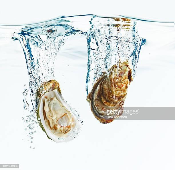 Oysters Splashing in Water