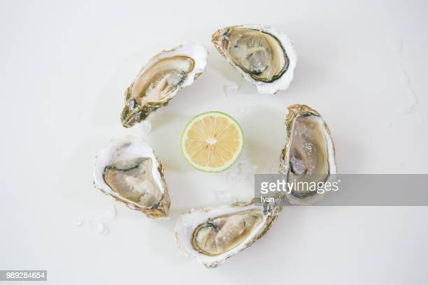 Oysters with green lemon and ice on white background