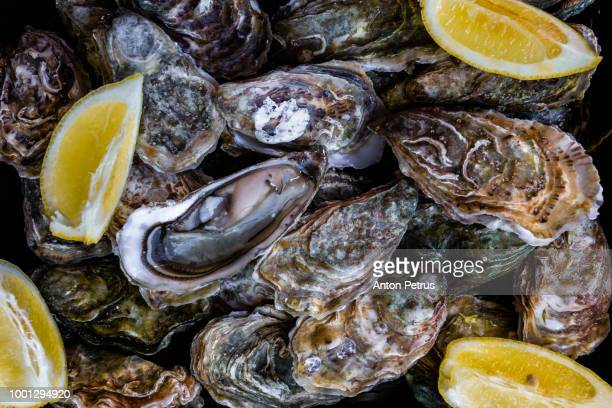 Oysters with lemon close-up