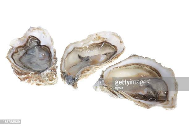 oysters with meat on the inside - oyster shell stock photos and pictures