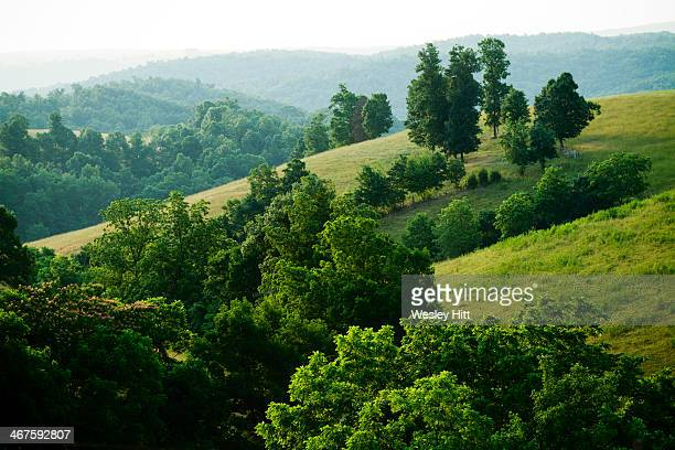ozark mountain hillside - ozark mountains stock pictures, royalty-free photos & images
