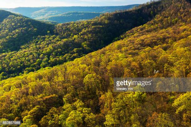 ozark national forest from white rock mountain - ozark mountains stock pictures, royalty-free photos & images