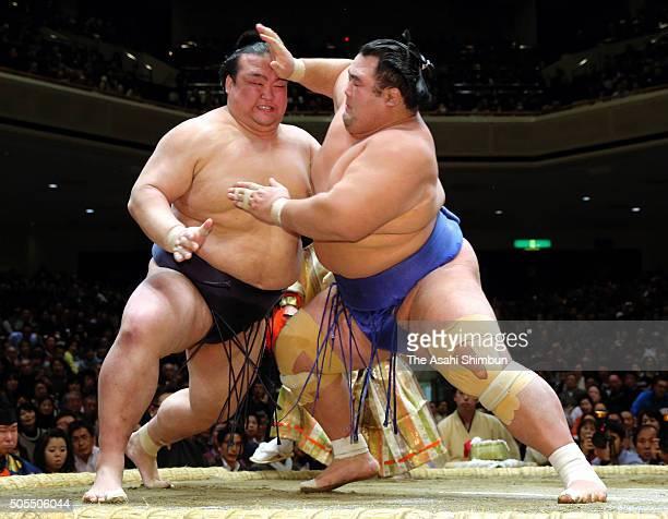 Ozeki Kotoshogiku and ozeki Kisenosato compete during day eight of the Grand Sumo New Year Tournament at Ryogoku Kokugikan on January 17 2016 in...
