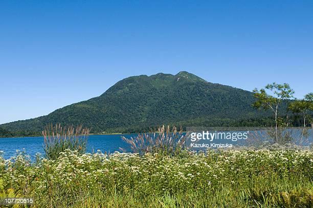 ozenuma-marsh- - kazuko kimizuka stock pictures, royalty-free photos & images