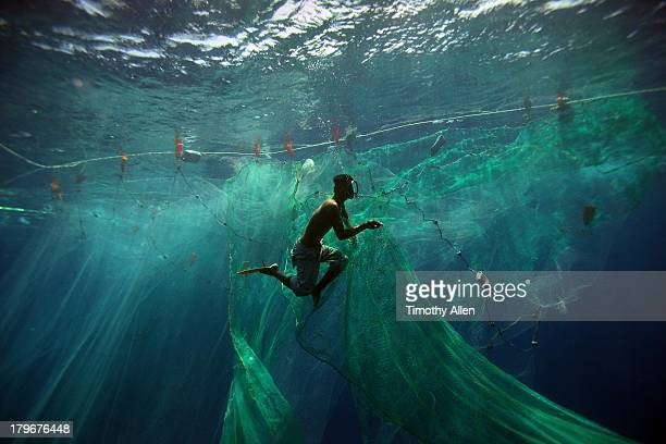 A Pa aling diver swims amid nets underwater