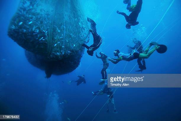 Pa aling divers float net full of fish to surface