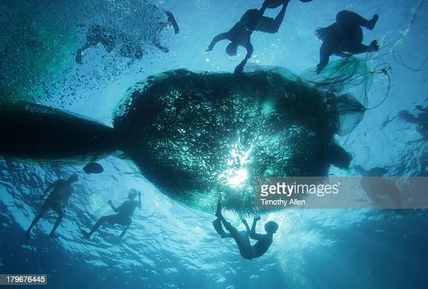 Pa aling divers raise net full of fish to surface