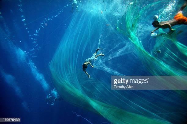 Pa aling divers swim amid nets underwater