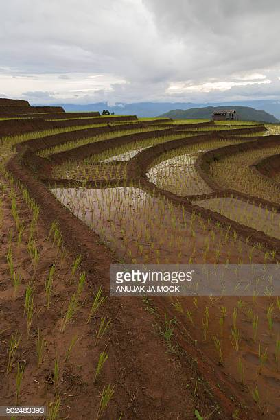 CONTENT] Pa Pong Biang rice terrace is the most famous rice terrace on the mountain in Chiang Mai Thailand It located in Jomthong district Chiang Mai...