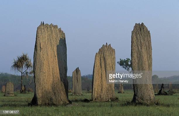 pa106-513e australia. magnetic termite mounds. amitermes meridionalis. - termite photos et images de collection