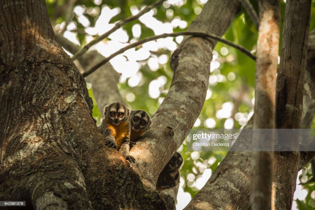 Pacaya Samiria National Reserve - Iquitos - Peru : Stock Photo