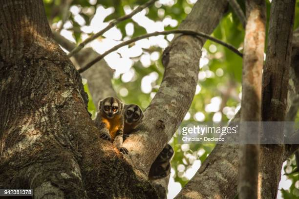 Pacaya Samiria National Reserve - Iquitos - Peru